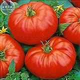 Potseed 2018 heiße Beefmaster Hybrid F1 Tomatensamen, 100 Samen, Profi-Pack, Giant Tasty Essbare Süße Gemüse E4076