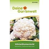 Winterblumenkohl Walcheren Samen - Brassica oleracea botrytis - Winterblumenkohlsamen - Gemüsesamen - Saatgut für 80 Pflanzen