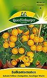 Quedlinburger 480432 BalkonTomate Balconi Yellow (Tomatensamen)