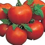 Tomate -AILSA CRAIG- 10 Samen -Robuste Tomate aus England-