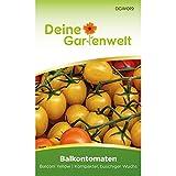 Balkontomate Balconi yellow Tomatensamen | Samen für gelbe Tomaten | Balkontomatensamen | Saatgut für Balconi-Tomaten