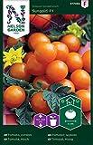 Tomatensamen Sungold F1 - Nelson Garden Samen für Gemüsegarten - Tomaten Saatgut (8 Stück) (Einzelpackung)