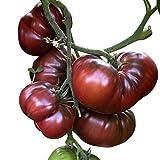Tomate - Black Krim 10 Samen -Super süße dunkle Fleischtomate-