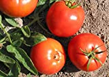 Bulgarische Druzba Tomato 15 Seeds - Heirloom