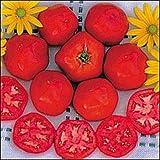 25 Samen von Tomate Druzba