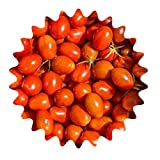 Mexikanische Honigtomate/ca. 20 Samen/Zuckersüß/teuerste Tomaten-Sorten