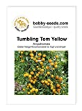 Tumbling Tom Yellow Tomatensamen von Bobby-Seeds Portion