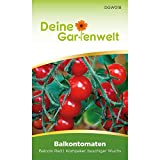 Balkontomate Balconi red Tomatensamen | Samen für Tomaten | Balkontomatensamen | Saatgut für Balconi-Tomaten
