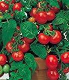 Tomaten Balkon Topf Tomate Balkonstar Höhe 40-50 cm Samen