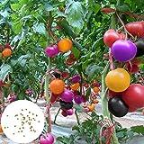 Benoon Tomatensamen, 200 Stück/Beutel Tomatensamen Süß Einfach Zu Lagerndes Gemüse Pflanzensamen Für Zu Hause Regenbogen