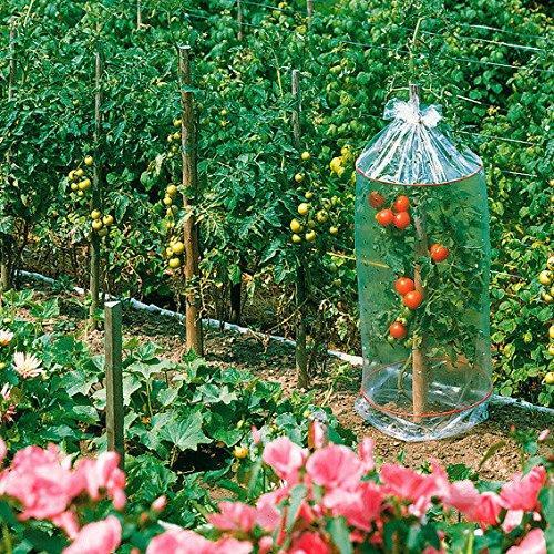 tomaten reifehaube