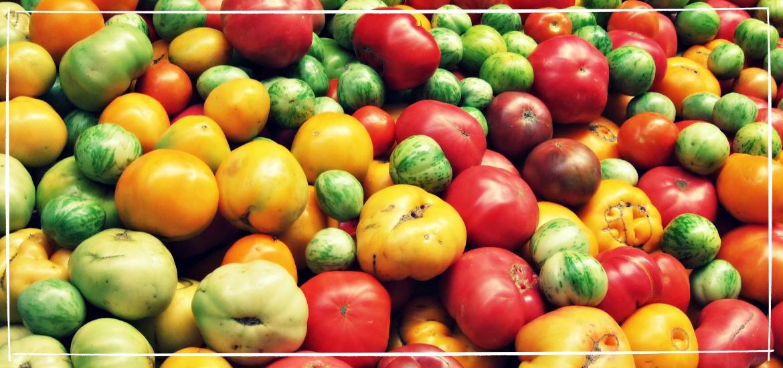 wie viele tomatensorten gibt es
