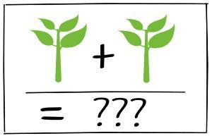 Aus F1 Tomaten Samen neue Pflanzen ziehen
