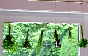 Kräuter trocken - Kräuterstrauß aufhängen