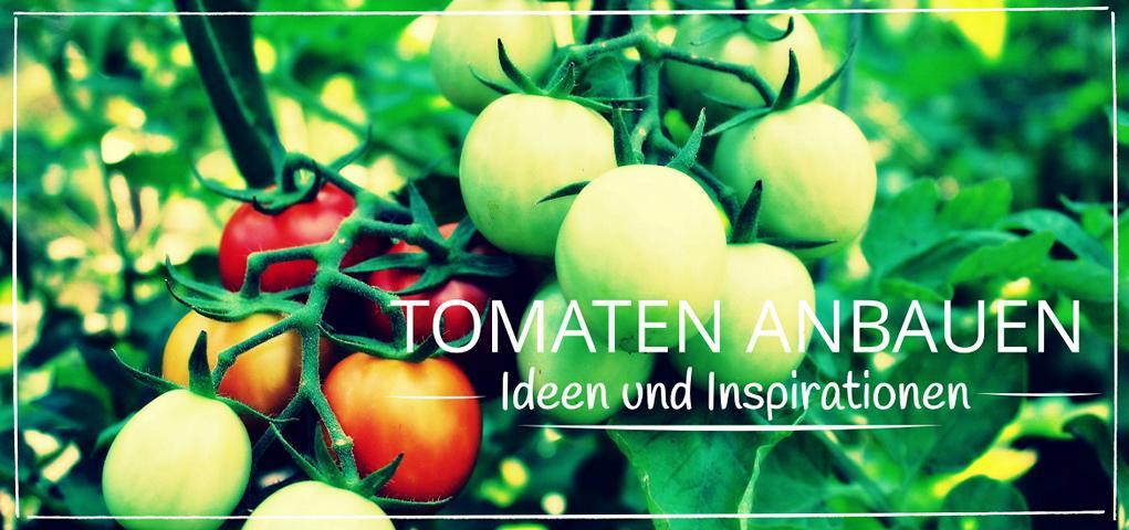 Tomaten anbauen - Ideen und Inspirationen
