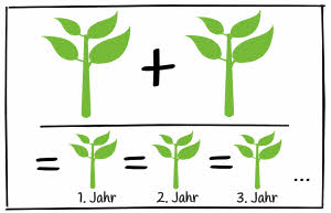 Tomatensamen alte Sorten - Vermehrung