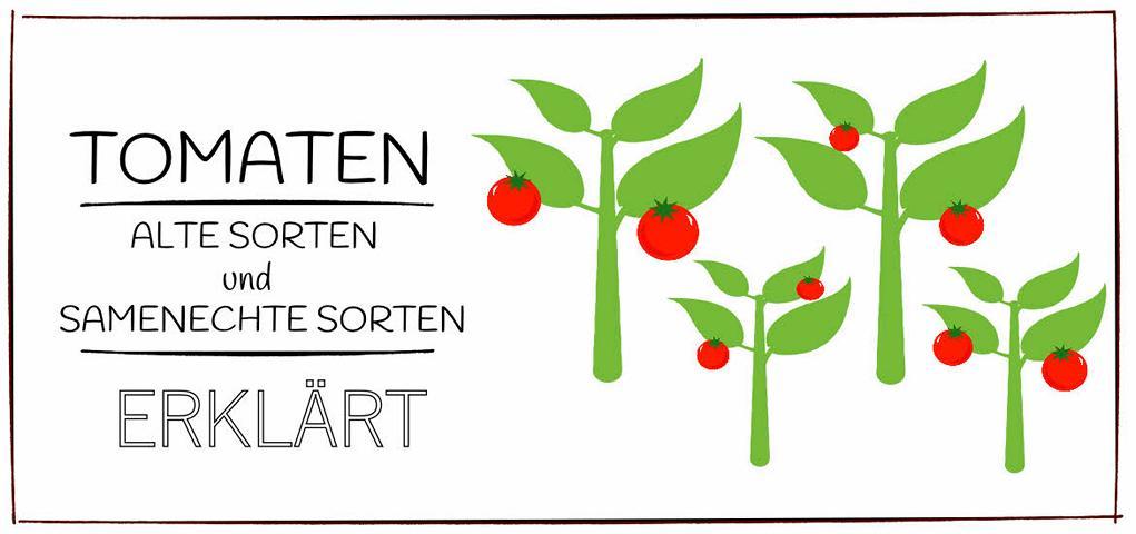 Tomatensamen alte Sorten und Samenechte Sorten
