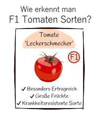 Wie erkennt man Tomaten F1 Hybride