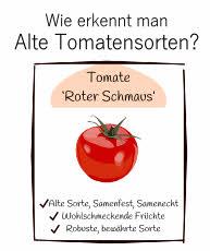 Wie erkennt man Tomatensamen alte Sorten und samenechte Sorten