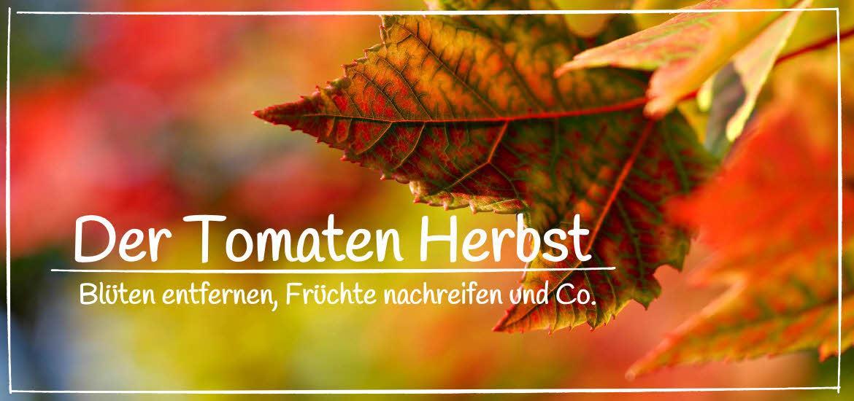 Tomaten Herbst