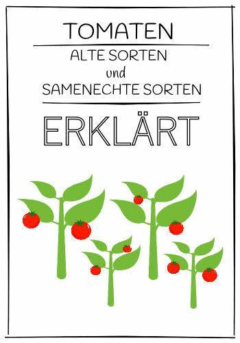 Tomaten alte Sorten und samenechte Sorten erklärt - Übersicht