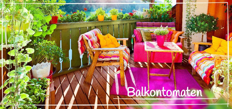 balkontomaten