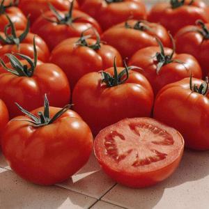 tomate ferline f1 krankheitstolerant und auch f rs freiland geeignet. Black Bedroom Furniture Sets. Home Design Ideas